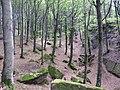 Foresta di Campigna - panoramio.jpg