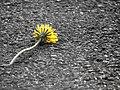 Forsaken - Flickr - JoshuaDavisPhotography.jpg