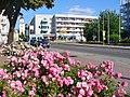 Forst - Rosen in der Altstadt (Old Town Roses) - geo.hlipp.de - 39120.jpg