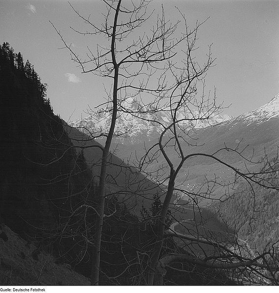File:Fotothek df ps 0001790 Bäume ^ Landschaften ^ Hügellandschaften - Gebirgslandsch.jpg