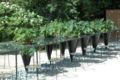 France Loir-et-Cher Festival jardins Chaumont-sur-Loire Table verte 02.JPG