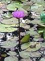 Frog and flower.jpg