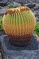 Fundación César Manrique - Echinocactus grusonii.jpg