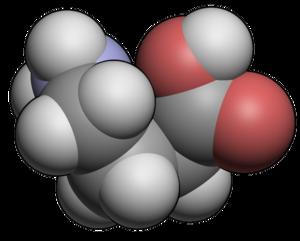Molecular spacefill of GABA