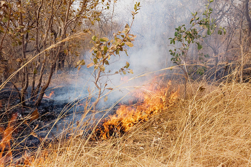 File:Gambian bushfire.jpg