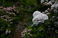 Garden-of-eden-walking-trail-flowers - West Virginia - ForestWander.jpg