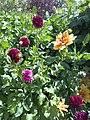 Garden flovers - panoramio.jpg