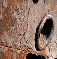 Gayundah,woody point (8120635358).jpg