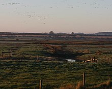 flock of geese rising from fields