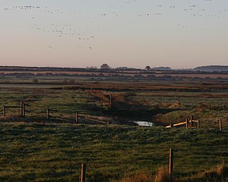 Holkham National Nature Reserve - Pink-footed geese leaving the grazing marshes at dawn