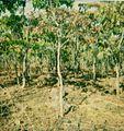 Gegend um Jamba-Angola - Savanne 1982-03.jpg