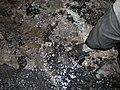 Geological Fault Gevra 01.JPG