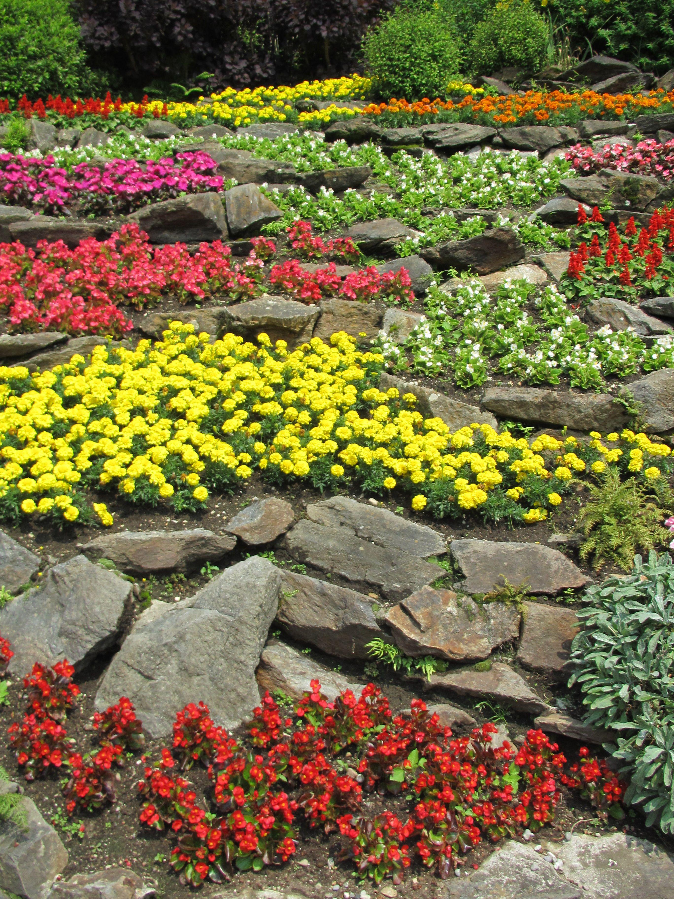 File giardino roccioso fiorito jpg wikimedia commons for Giardino fiorito
