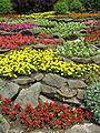 Giardino roccioso fiorito.JPG