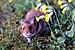 אוגר זהוב - Photo (c) Sqrt,  זכויות יוצרים חלקיות (CC BY)