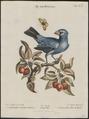 Goniaphea cyanea - 1700-1880 - Print - Iconographia Zoologica - Special Collections University of Amsterdam - UBA01 IZ16000139.tif