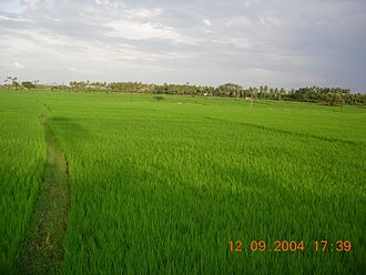 Agriculture in ancient Tamil country - Paddy fields in present-day Tamil Nadu