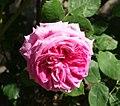Gori - flower.jpg