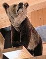 Granfjällsbjörnen 4452.jpg