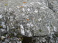 Granite Dents a cheval F.JPG