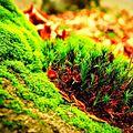 Grassland. Img.jpg