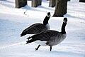 Graveyard geese.jpg