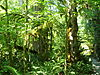 Densely populated greenery in a forest