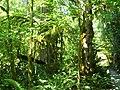Green (2745211060).jpg