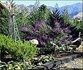 Green Spot Farm, Garden 10-26-13 (10561513943).jpg