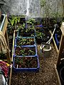 Greenhouse 2010 - Flickr - peganum.jpg