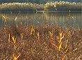 Großer Ostersee im Herbst.jpg