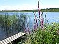 Großer Pinnower See - Ufer 001.jpg