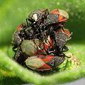 Ground Bugs - Flickr - treegrow.jpg