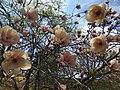 Gryshko botanical garden (Apr 2018) 08.jpg