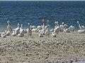 Gulf Coast Visitor Center - panoramio (2).jpg