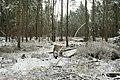 Hövelhofer Wald - Sturmschäden - 6.jpg