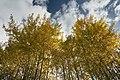 Høstosp etter Skreiabanen 04-10-19.jpg