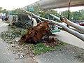 HK Sha Tin trees collapsed on minibus Sept-2018.jpg