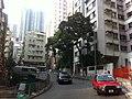 HK Sheung Wan morning 樂古道 3 Lok Ku Road trees view Hollywood Road Nov-2011.jpg