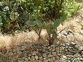 Hadassah Trail P1150515.JPG
