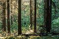 Haltern am See, Wald am Halterner Stausee -- 2014 -- 1146.jpg