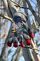 Handschuh im Baum.jpg
