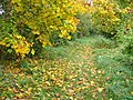 Havelkanal - Uferweg (Havel Canal - Waterside Path) - geo.hlipp.de - 43260.jpg