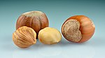 Hazelnuts (Corylus avellana) - whole with kernels.jpg