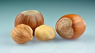 Hazelnuts (Corylus avellana) - whole with kernels.jpg