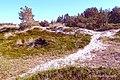 Heidelandschaft Nationalpark Vorpommersche Boddenlandschaft.jpg