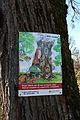Hellbrunner Allee - Plakat Insektenhotel.JPG