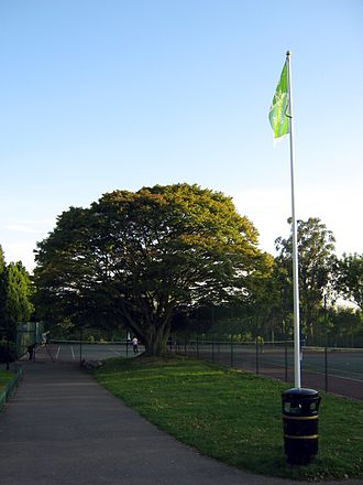 Hendon Park - The acer tree with the park's green flag