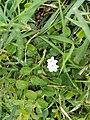 Herbal flower.jpg