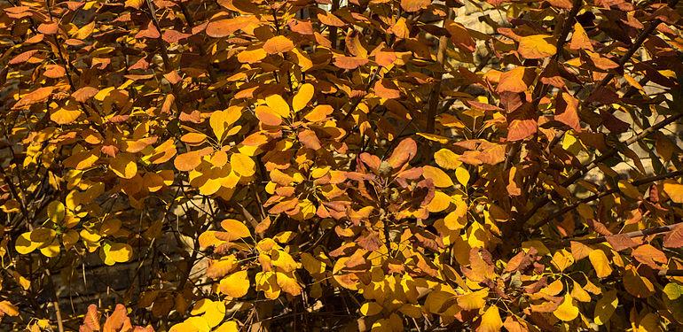 Herbst141120-001.jpg